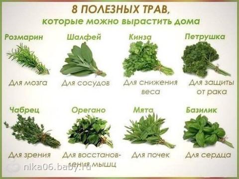 Какие травы и специи нельзя беременным