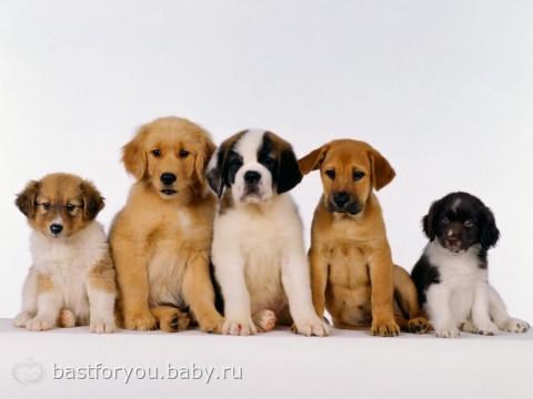 породы разных собак фото